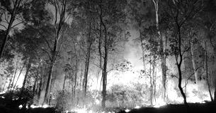 Sonoma Fire